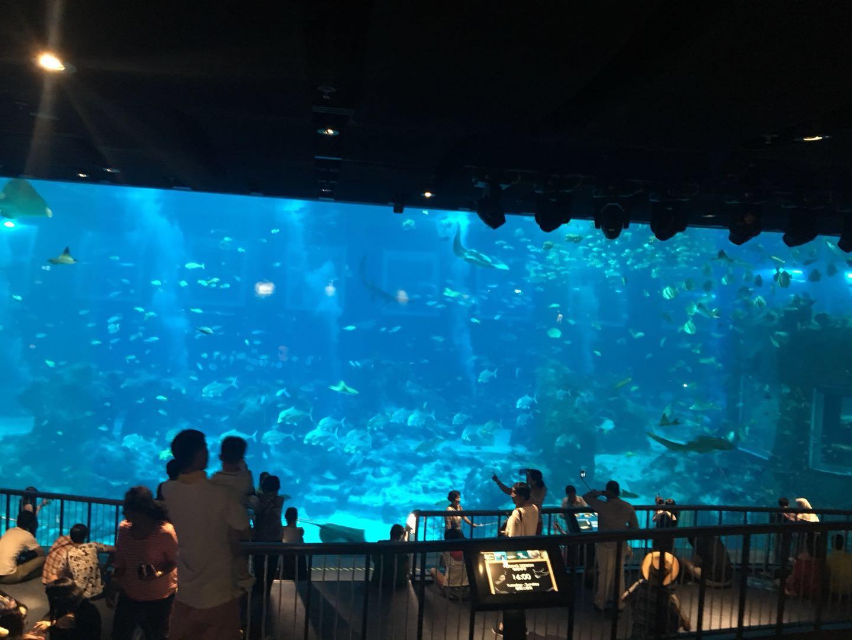 S.E.A 海洋馆(S.E.A.Aquarium)
