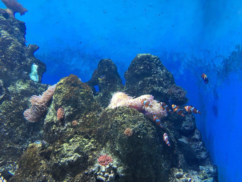 S.E.A 海洋馆小丑鱼(S.E.A.Aquarium Jellyfish)